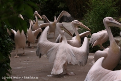 Zoo-Hannover-180610-IMG_3732
