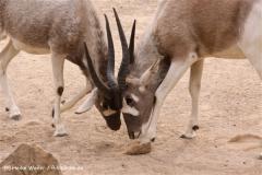 Zoo-Hannover-180610-IMG_3815