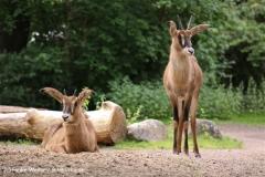 Zoo-Hannover-180610-IMG_3836