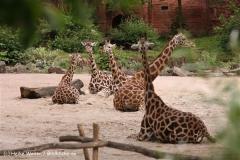 Zoo-Hannover-180610-IMG_3853