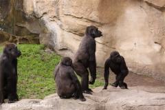 Zoo-Hannover-180610-IMG_3871