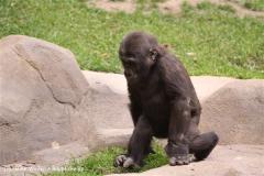Zoo-Hannover-180610-IMG_3876
