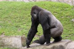 Zoo-Hannover-180610-IMG_3884