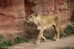 Zoo-Hannover-180610-IMG_3912