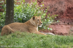 Zoo-Hannover-180610-IMG_3917