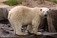 Zoo-Hannover-180610-IMG_3962