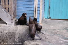 Zoo-Hannover-180610-IMG_3985