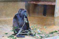 Zoo_Hannover_180915_IMG_8554