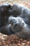Zoo_Hannover_180915_IMG_8558