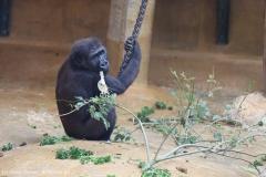 Zoo_Hannover_180915_IMG_8565