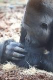 Zoo_Hannover_180915_IMG_8578