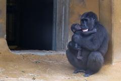 Zoo_Hannover_180915_IMG_8614