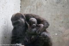 Zoo_Hannover_180915_IMG_8649