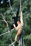 Zoo_Hannover_180915_IMG_8713