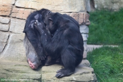 Zoo_Hannover_180915_IMG_8715
