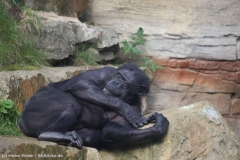 Zoo_Hannover_180915_IMG_8716