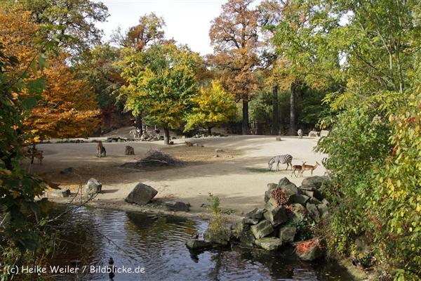 Zoo_Hannover_191012_IMG_0005