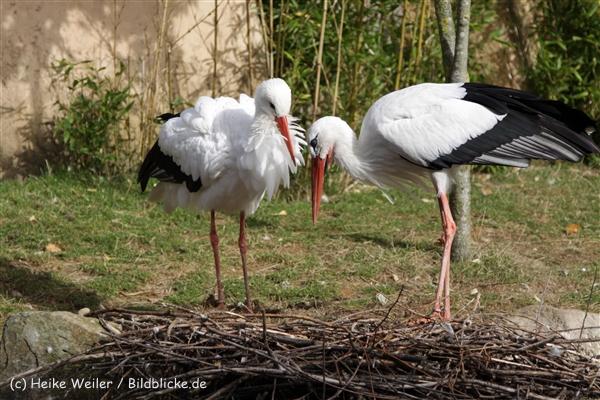 Zoo_Hannover_191012_IMG_0146