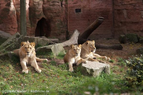Zoo_Hannover_191012_IMG_0193