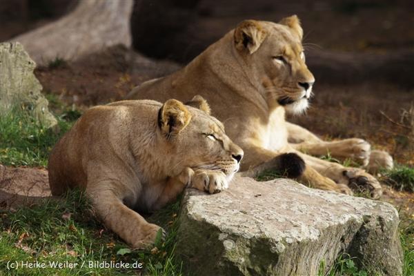 Zoo_Hannover_191012_IMG_0197