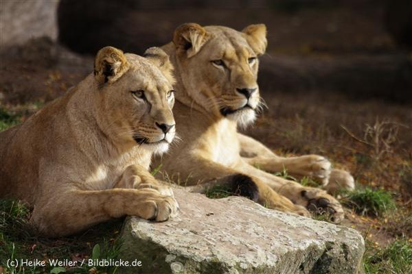 Zoo_Hannover_191012_IMG_0200