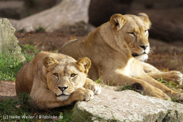 Zoo_Hannover_191012_IMG_0205