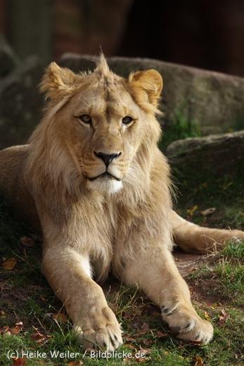Zoo_Hannover_191012_IMG_0215