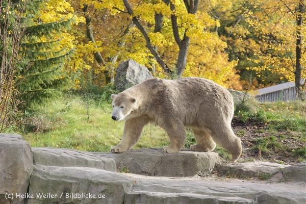 Zoo_Hannover_191012_IMG_0275