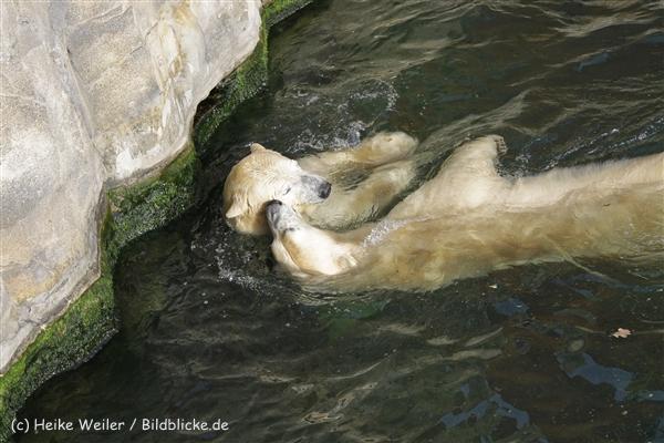 Zoo_Hannover_191012_IMG_0323