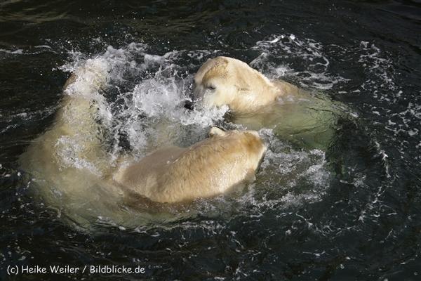 Zoo_Hannover_191012_IMG_0369