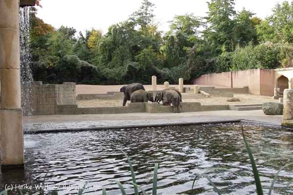 Zoo_Hannover_191012_IMG_0394
