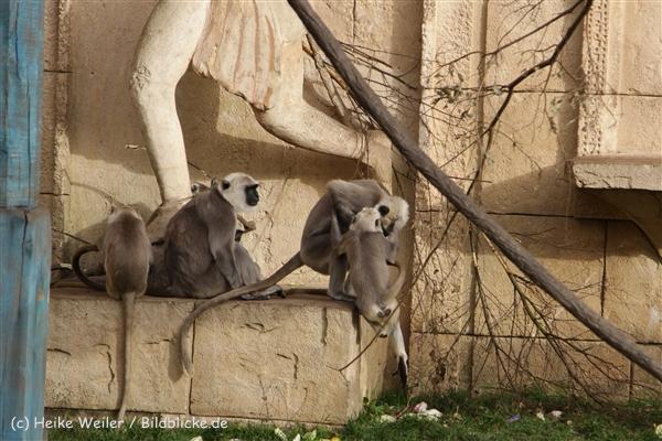 Zoo_Hannover_191012_IMG_0428