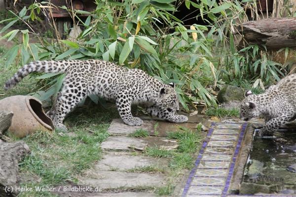Zoo_Hannover_191012_IMG_0447