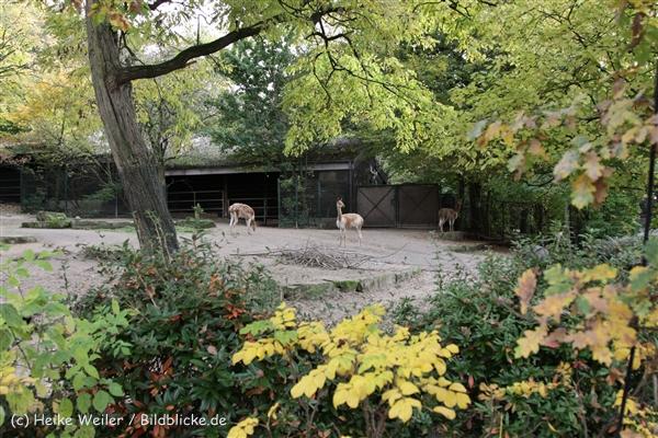 Zoo_Hannover_191012_IMG_0596