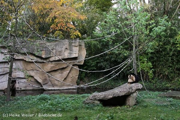 Zoo_Hannover_191012_IMG_0638