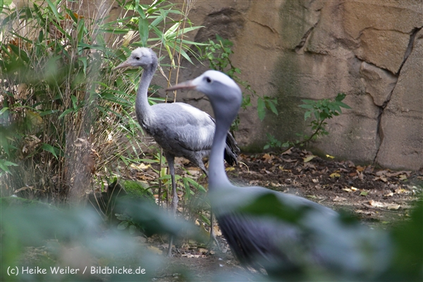 Zoo_Hannover_191012_IMG_0_9950