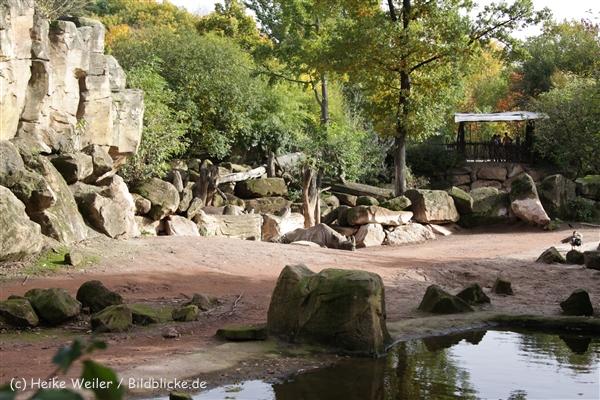Zoo_Hannover_191012_IMG_0_9951