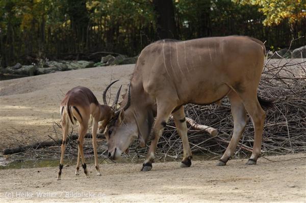 Zoo_Hannover_191012_IMG_0_9974