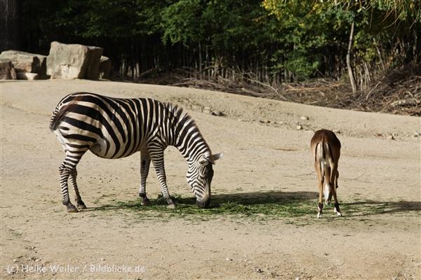 Zoo_Hannover_191012_IMG_0_9980