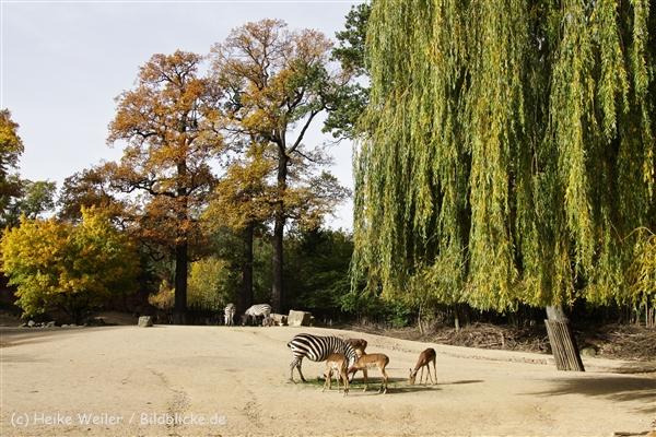 Zoo_Hannover_191012_IMG_0_9985