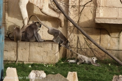 Zoo_Hannover_191012_IMG_0438