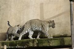 Zoo_Hannover_191012_IMG_0504