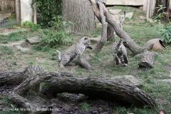Zoo_Hannover_191012_IMG_0559