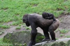 Zoo_Hannover_191012_IMG_0661