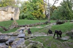 Zoo_Hannover_191012_IMG_0662
