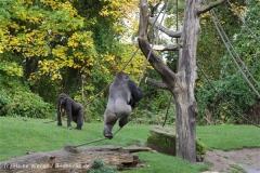 Zoo_Hannover_191012_IMG_0671