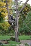 Zoo_Hannover_191012_IMG_0679