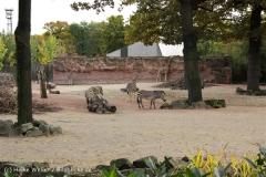 Zoo_Hannover_191012_IMG_0687