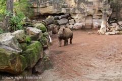 Zoo_Hannover_191012_IMG_0688