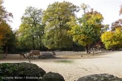 Zoo_Hannover_191012_IMG_0_9977